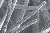 Plasma assisted cold sintering of organometallic fibres and coatings